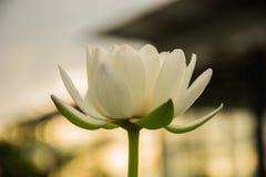 romantische witte bloem royalty-vrije stock foto