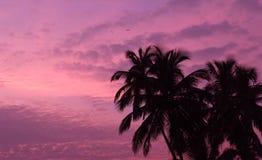 Romantische zonsondergang Royalty-vrije Stock Foto