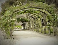 Romantischer altmodischer rosafarbener Tunnel Stockfoto