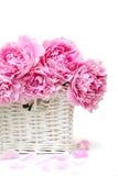 Romantischer Blumenstrauß. Empfindliche rosafarbene Pfingstrosen Lizenzfreies Stockfoto