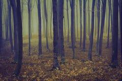 Romantischer eleganter Wald während eines nebeligen Tages Lizenzfreies Stockfoto
