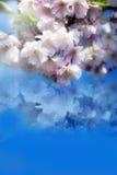 Romantischer Frühling Lizenzfreies Stockfoto