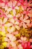 Romantischer Hintergrund der Weinlese Stockfoto