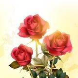 Romantischer Hintergrund des Schmutzes mit Rosen Stockfotografie