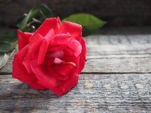Romantischer Hintergrund mit Rotrose auf hölzerner Tabelle Lizenzfreies Stockfoto