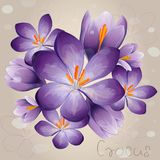 Romantischer lila Krokus vektor abbildung