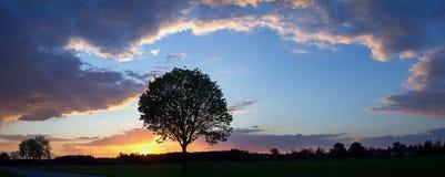 Romantischer Sonnenuntergang mit Baumschattenbild und -wolken Stockfotos