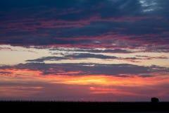 Romantischer Sonnenuntergang mit schwarzem Grasschattenbild Stockbild