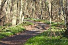 Romantischer Wald Lizenzfreie Stockfotos