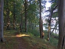 Romantischer Wald durch Meer Lizenzfreies Stockfoto