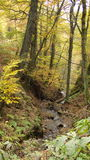 Romantischer Wald mit einem Rivulet Stockfotografie