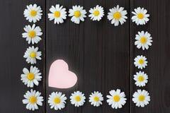 Romantisches Blumenfeld Lizenzfreie Stockfotografie