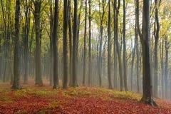 Romantisk atmosfär under mist int honom skog i nedgång Arkivbild