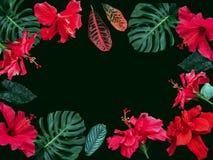 Romantisk bakgrund för naturram med blommor Royaltyfria Foton