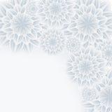 Romantisk bakgrund med blommakrysantemumet Royaltyfri Foto
