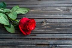 Romantisk bakgrund med den röda rosen på den wood tabellen, bästa sikt Arkivbild