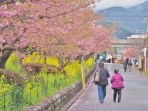 Romantisk bana av härliga Cherry Blossom, Sakura fotografering för bildbyråer