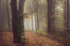 Romantisk dimmig atmosfär i dimmig skog Royaltyfria Foton