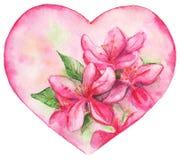 Romantisk förälskelsehjärta för rosa blom- lilja Arkivbild