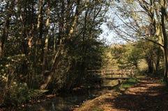 Romantisk fläck i skogen Arkivbilder