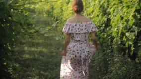 Romantisk flickaspring i vingårdar arkivfilmer