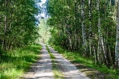 romantisk grusväg i grön trädskog Royaltyfria Bilder