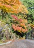 Romantisk höstväg i Miyajima, Japan Arkivbild
