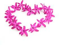 Romantisk hjärta formar den rosa hyacintet Arkivbilder