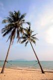 Romantisk kokosnöt Royaltyfria Bilder