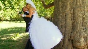 Romantisk kyss trädet arkivfilmer