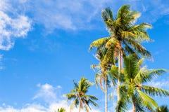 Romantisk palmträd på den tropiska ön blå ljus sky för bakgrund Arkivbild