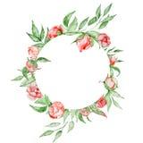 Romantisk ram med blommakortmallen Vattenfärgpioner med gräsplansidor på den vita bakgrunden illustratören för illustrationen för Arkivfoton