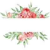 Romantisk ram med blommakortmallen Vattenfärgpioner med gräsplansidor på den vita bakgrunden illustratören för illustrationen för Royaltyfria Bilder