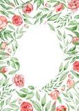 Romantisk ram med blommakortmallen Vattenfärgpioner med gräsplansidor på den vita bakgrunden illustratören för illustrationen för Royaltyfria Foton