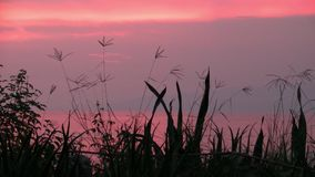 Romantisk rosa solnedgång på sjön Albert, Uganda, Afrika lager videofilmer