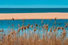 Romantisk sjösida: torrt gräs vid den tomma stranden royaltyfria bilder