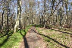 Romantisk skog Fotografering för Bildbyråer