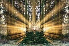 Romantisk soluppgång i otta i skogen med ljus sunb royaltyfri bild