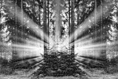 Romantisk soluppgång i otta i skogen med ljus sunb royaltyfri foto