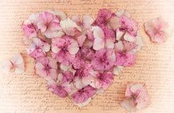 Romantisk tappningvanlig hortensiablomma i forma av en rosa hjärta Royaltyfria Bilder