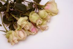 Romantisk valentindagbakgrund med rosor i hörn Arkivfoto