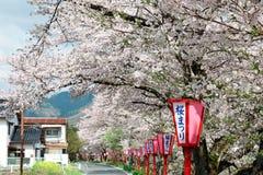 Romantisk valvgång av att frodas körsbärsröda blomningar (Sakura Namiki) och traditionella japanska lampstolpar längs en landsro Arkivbilder