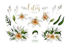 Romantisk vykortbeståndsdeluppsättning av liljablommor som isoleras på vit royaltyfri illustrationer