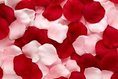 Romantiska röda och rosa rosa petals Royaltyfri Foto