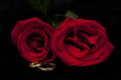 Romantiska röda rosor med ett par av allianser royaltyfri foto