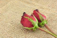 Romantiska röda rosor på säckvävtappningbakgrund Arkivfoto