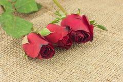 Romantiska röda rosor på säckvävtappningbakgrund Arkivbilder