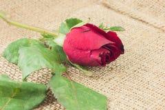 Romantiska röda rosor på säckvävtappningbakgrund Royaltyfri Fotografi