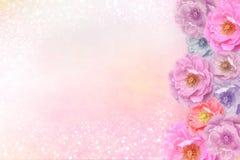 Romantiska rosa purpurfärgade rosor blommar gränsen på mjukt blänker bakgrund för valentin- eller bröllopkort i pastellfärgad sig royaltyfria bilder
