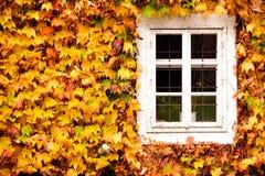 Romantiskt fönster med gul höstlövverk royaltyfri foto